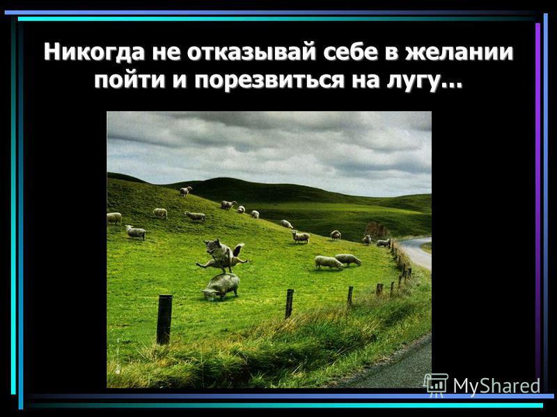 Никогда не отказывай себе в желании пойти и порезвиться на лугу...