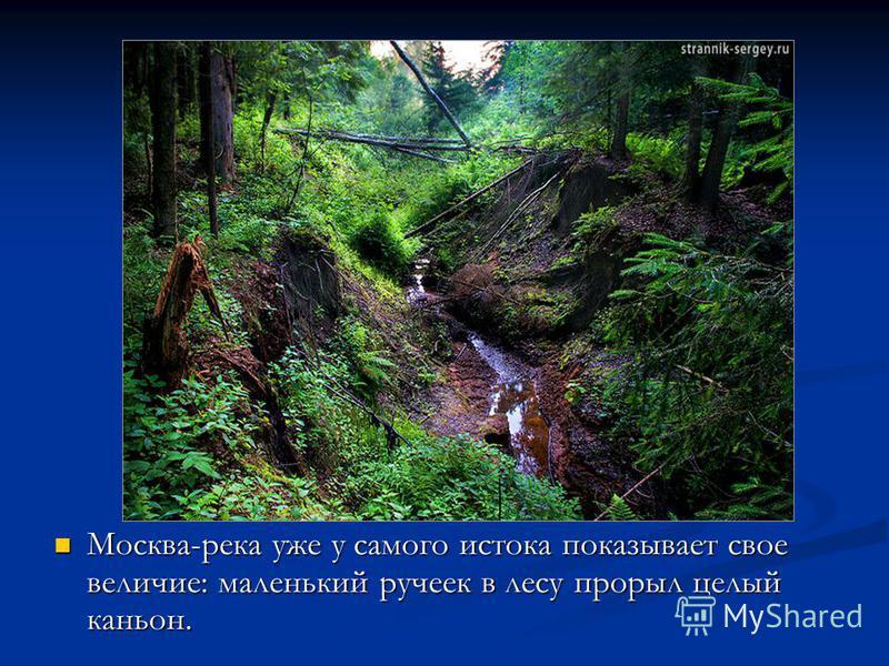 Москва-река уже у самого истока показывает свое величие: маленький ручеек в лесу прорыл целый каньон.