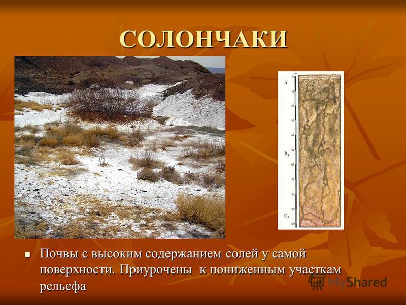СОЛОНЧАКИ Почвы с высоким содержанием солей у самой поверхности. Приурочены к пониженным участкам рельефа Почвы с высоким содержанием солей у самой поверхности. Приурочены к пониженным участкам рельефа