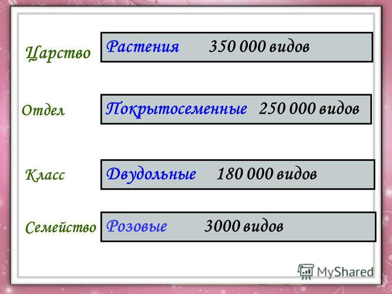 Царство Отдел Класс Семейство Растения 350 000 видов Покрытосеменные 250 000 видов Двудольные 180 000 видов Розовые 3000 видов