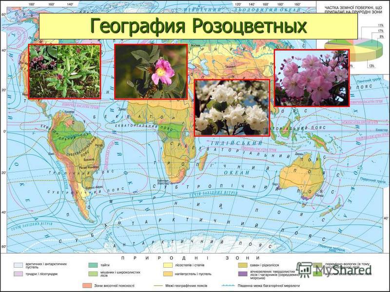 География Розоцветных