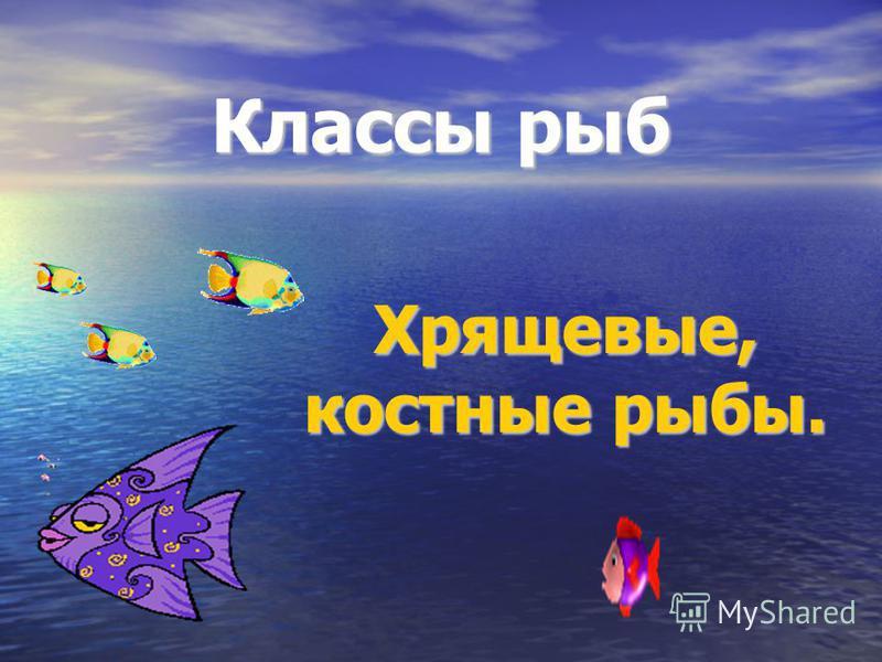 Классы рыб Хрящевые, костные рыбы.