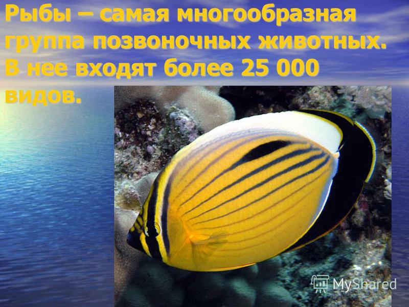 Рыбы – самая многообразная группа позвоночных животных. В нее входят более 25 000 видов.