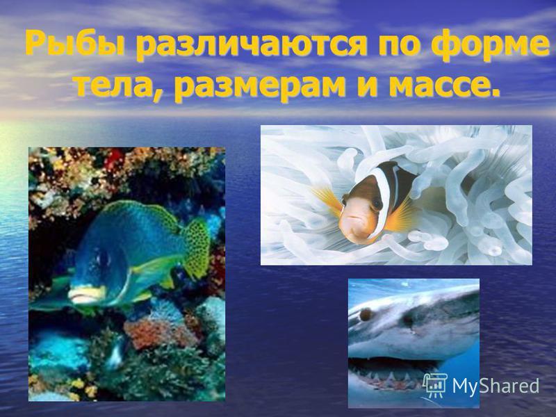 Рыбы различаются по форме тела, размерам и массе.