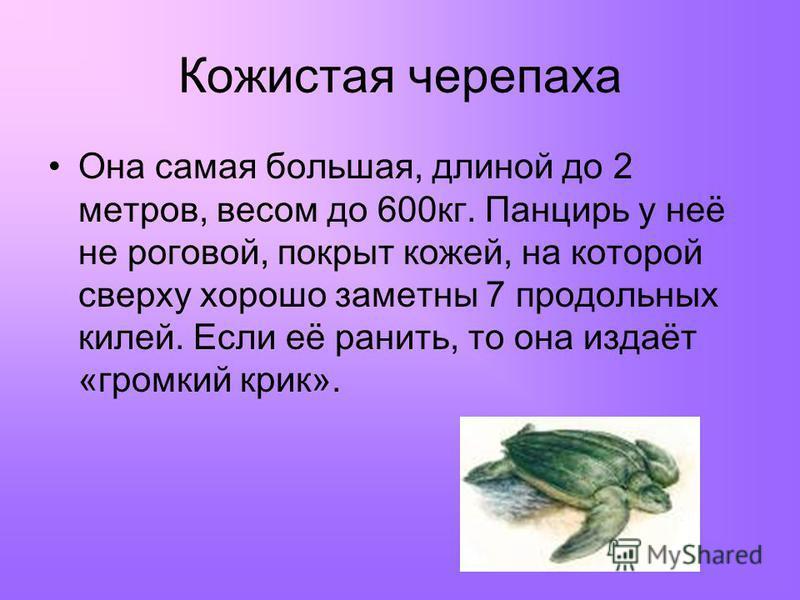 Кожистая черепаха Она самая большая, длиной до 2 метров, весом до 600 кг. Панцирь у неё не роговой, покрыт кожей, на которой сверху хорошо заметны 7 продольных килей. Если её ранить, то она издаёт «громкий крик».