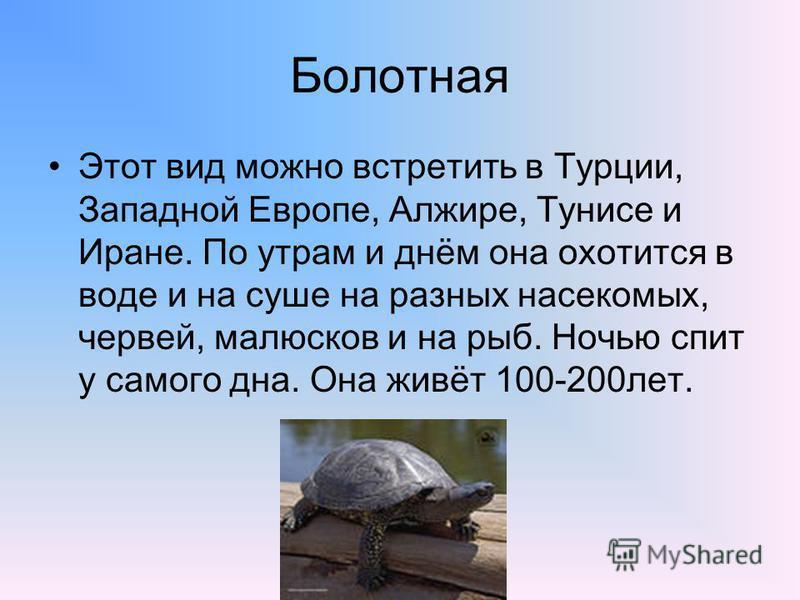 Болотная Этот вид можно встретить в Турции, Западной Европе, Алжире, Тунисе и Иране. По утрам и днём она охотится в воде и на суше на разных насекомых, червей, малюсков и на рыб. Ночью спит у самого дна. Она живёт 100-200 лет.