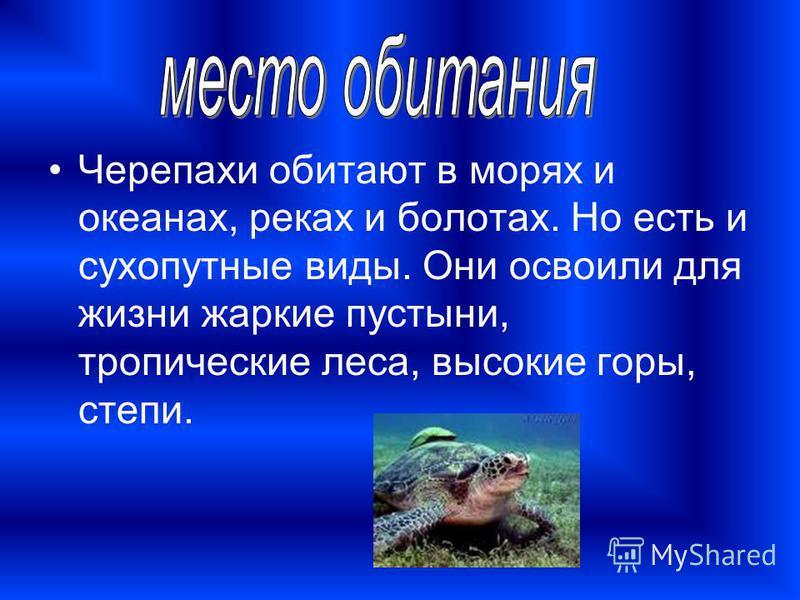 Черепахи обитают в морях и океанах, реках и болотах. Но есть и сухопутные виды. Они освоили для жизни жаркие пустыни, тропические леса, высокие горы, степи.
