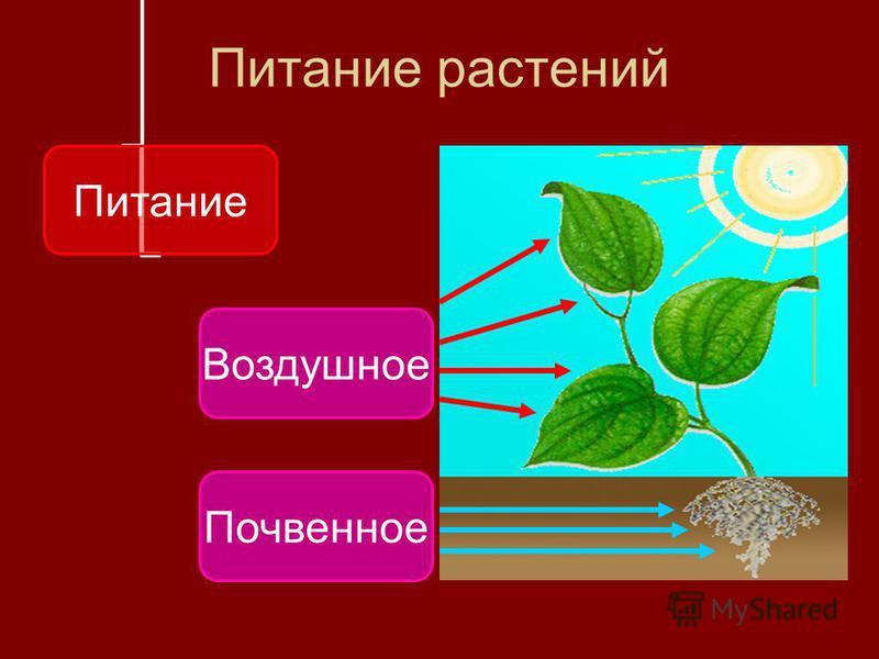 Питание растений Питание Воздушное Почвенное