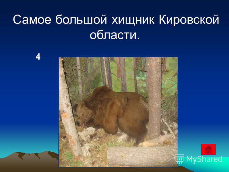4 Самое большой хищник Кировской области.