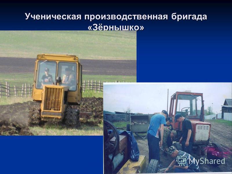 Ученическая производственная бригада «Зёрнышко»