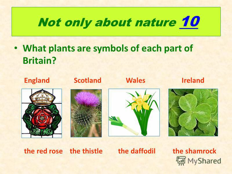 Not only about nature 10 10 What plants are symbols of each part of Britain? England Scotland Wales Ireland the red rose the thistle the daffodil the shamrock