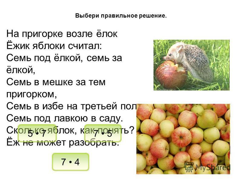 На пригорке возле ёлок Ёжик яблоки считал: Семь под ёлкой, семь за ёлкой, Семь в мешке за тем пригорком, Семь в избе на третьей полке, Семь под лавкою в саду. Сколько яблок, как понять? Ёж не может разобрать. 7 5 7 4 Выбери правильное решение. 5 7