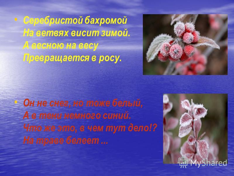Серебристой бахромой На ветвях висит зимой. А весною на весу Превращается в росу. Он не снег, но тоже белый, А в тени немного синий. Что же это, в чем тут дело!? На траве белеет...