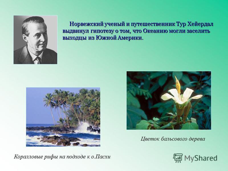 Норвежский ученый и путешественник Тур Хейердал выдвинул гипотезу о том, что Океанию могли заселить выходцы из Южной Америки. Цветок бальзового дерева Коралловые рифы на подходе к о.Пасхи