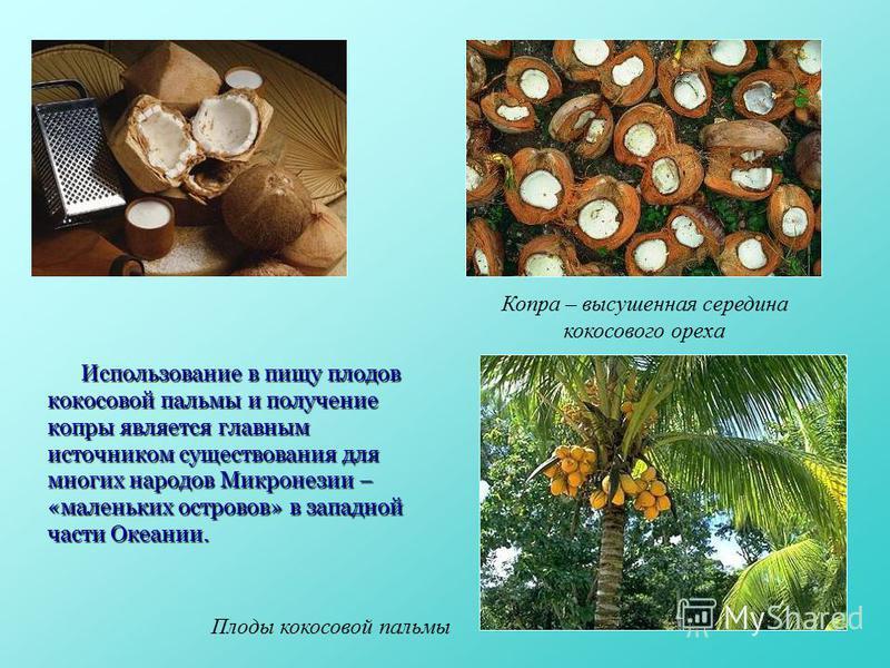 Использование в пищу плодов кокосовой пальмы и получение копры является главным источником существования для многих народов Микронезии – «маленьких островов» в западной части Океании. Копра – высушенная середина кокосового ореха Плоды кокосовой пальм