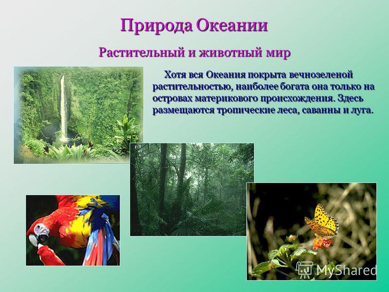 Природа Океании Растительный и животный мир Хотя вся Океания покрыта вечнозеленой растительностью, наиболее богата она только на островах материкового происхождения. Здесь размещаются тропические леса, саванны и луга.