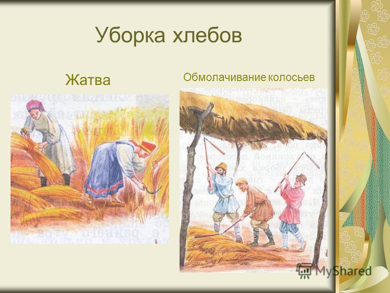 Уборка хлебов Жатва Обмолачивание колосьев