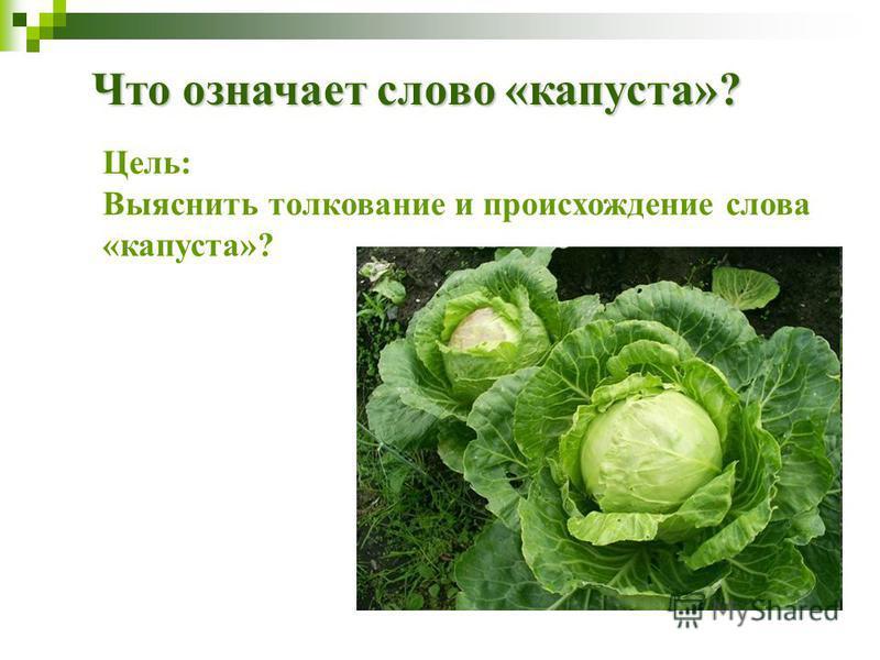 Что означает слово «капуста»? Цель: Выяснить толкование и происхождение слова «капуста»?