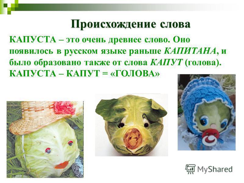 Происхождение слова КАПУСТА – это очень древнее слово. Оно появилось в русском языке раньше КАПИТАНА, и было образовано также от слова КАПУТ (голова). КАПУСТА – КАПУТ = «ГОЛОВА»