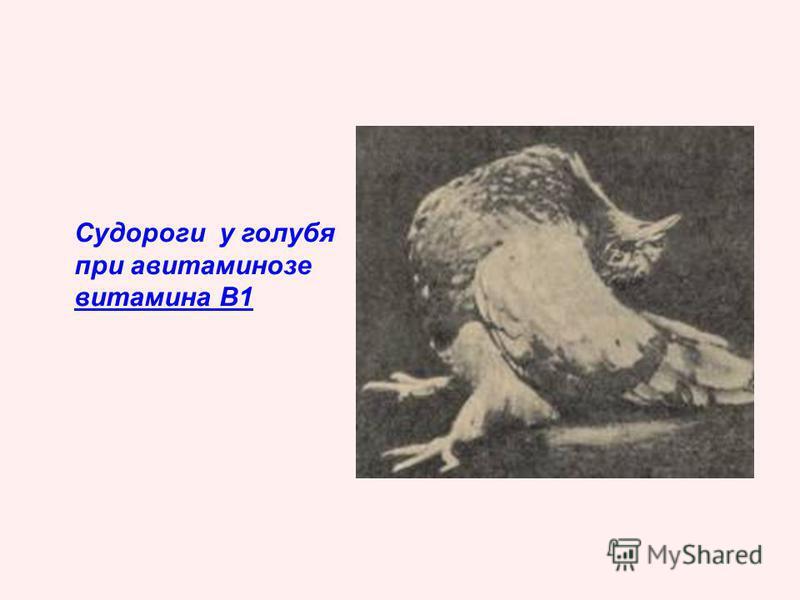 Судороги у голубя при авитаминозе витамина В1