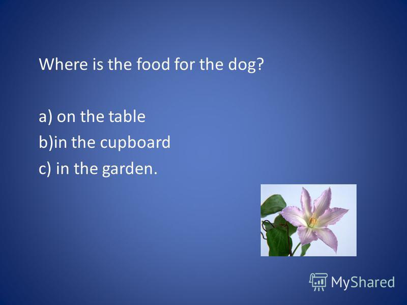 Where is the food for the dog? a) on the table b)in the cupboard c) in the garden.
