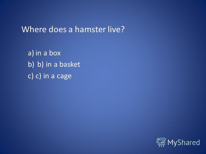 Where does a hamster live? a)in a box b) b) in a basket c)c) in a cage