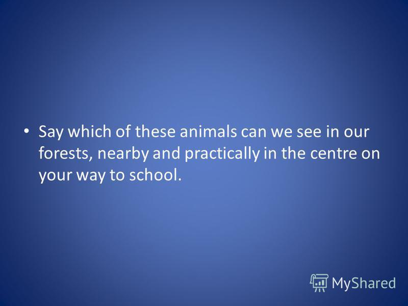 Say which of these animals can we see in our forests, nearby and practically in the centre on your way to school.