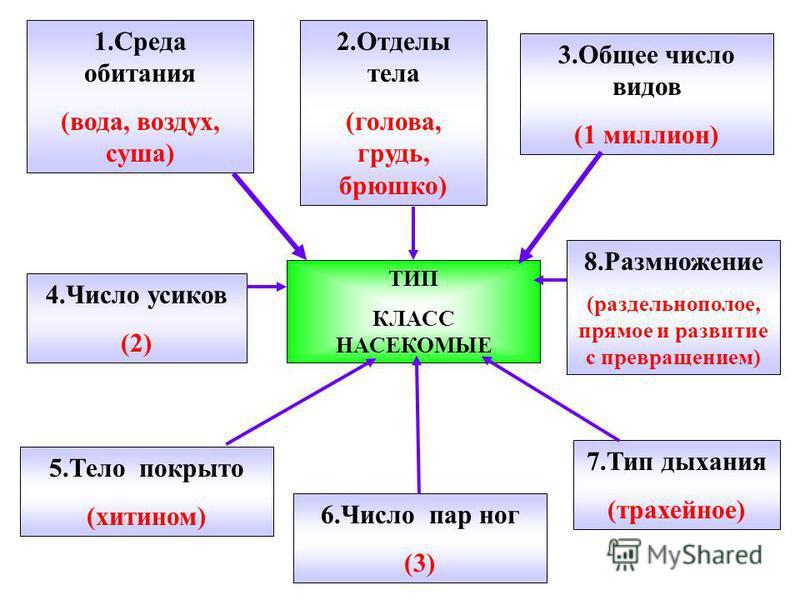 1. Среда обитания (вода, воздух, суша) 2. Отделы тела (голова, грудь, брюшко) 3. Общее число видов (1 миллион) 4. Число усиков (2) ТИП КЛАСС НАСЕКОМЫЕ 8. Размножение (раздельнополое, прямое и развитие с превращением) 5. Тело покрыто (хитином) 6. Числ