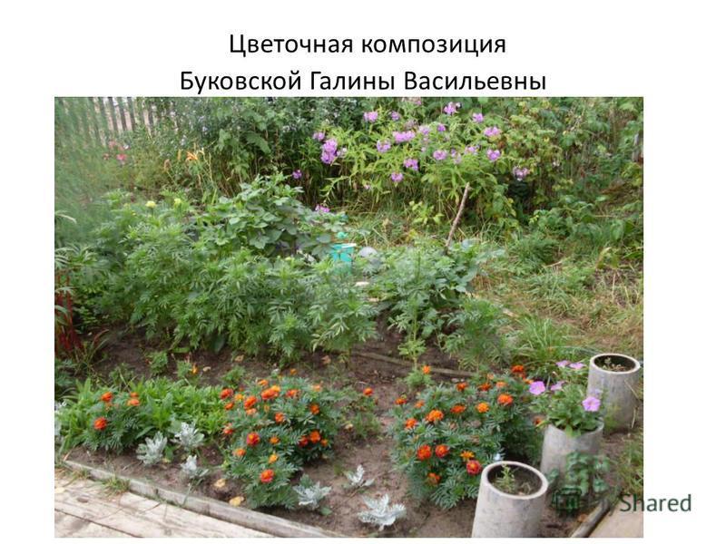 Цветочная композиция Буковской Галины Васильевны