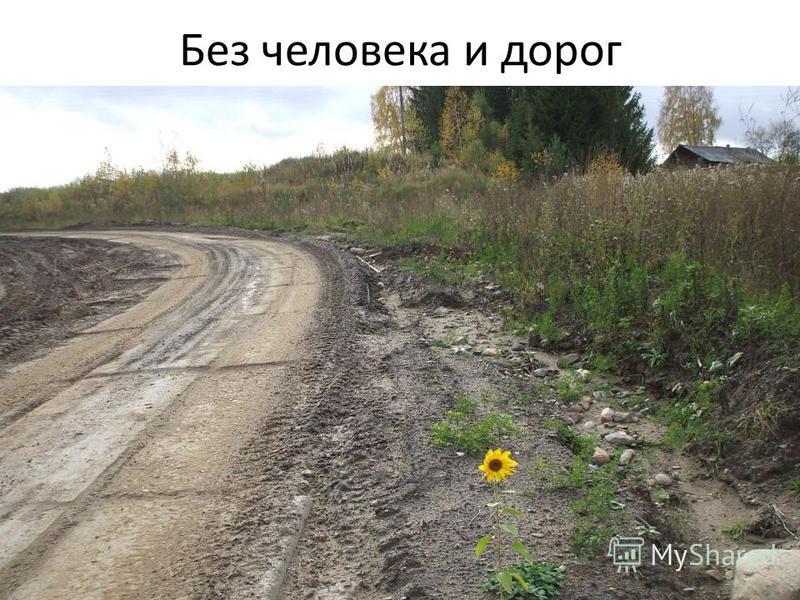 Без человека и дорог