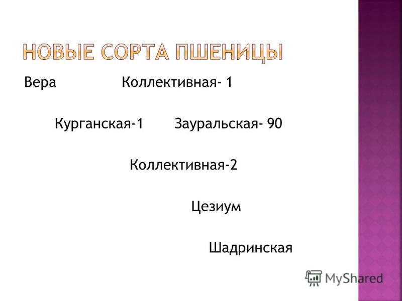 Вера Коллективная- 1 Курганская-1 Зауральская- 90 Коллективная-2 Цезиум Шадринская