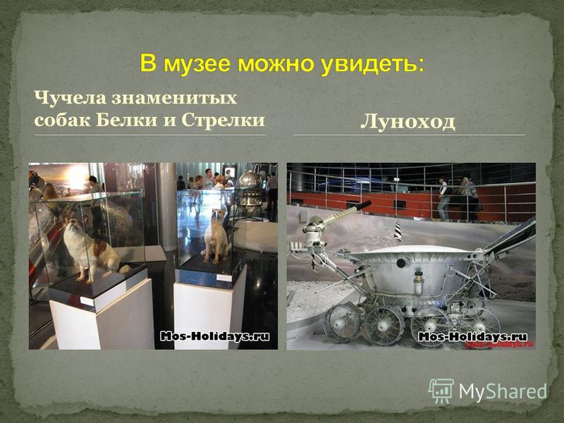 Чучела знаменитых собак Белки и Стрелки Луноход