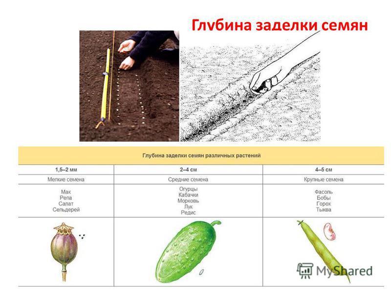 Глубина заделки семян