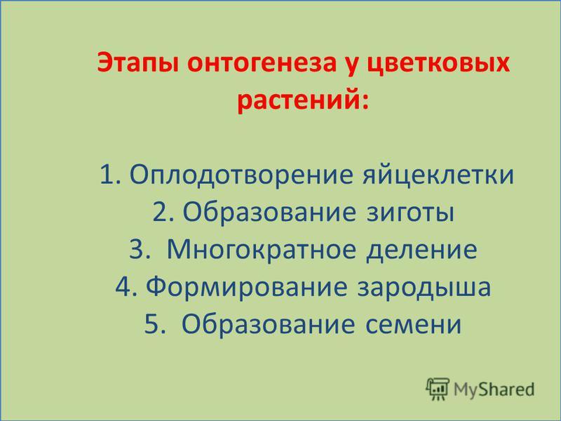 Этапы онтогенеза у цветковых растений: 1. Оплодотворение яйцеклетки 2. Образование зиготы 3. Многократное деление 4. Формирование зародыша 5. Образование семени