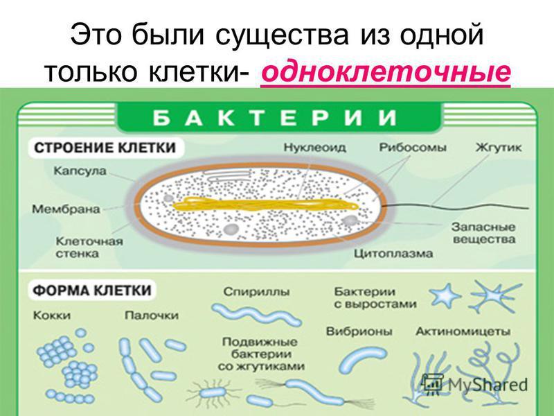 Это были существа из одной только клетки- одноклеточные