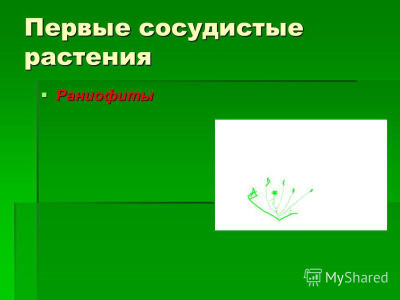 Первые сосудистые растения Раниофиты Раниофиты