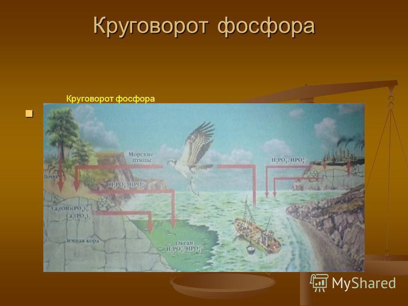 Круговорот фосфора Круговорот фосфора Круговорот фосфора