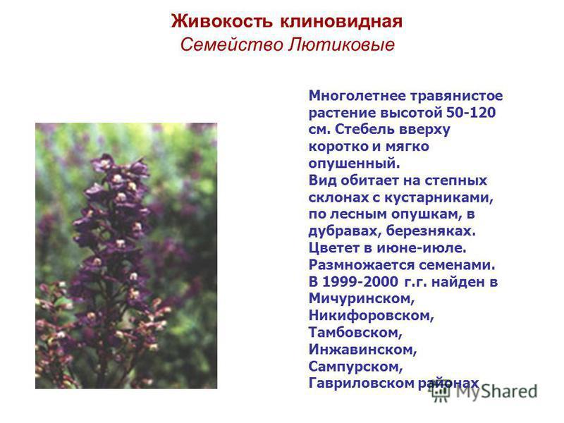 Живокость клиновидная Семейство Лютиковые Многолетнее травянистое растение высотой 50-120 см. Стебель вверху коротко и мягко опушенный. Вид обитает на степных склонах с кустарниками, по лесным опушкам, в дубравах, березняках. Цветет в июне-июле. Разм