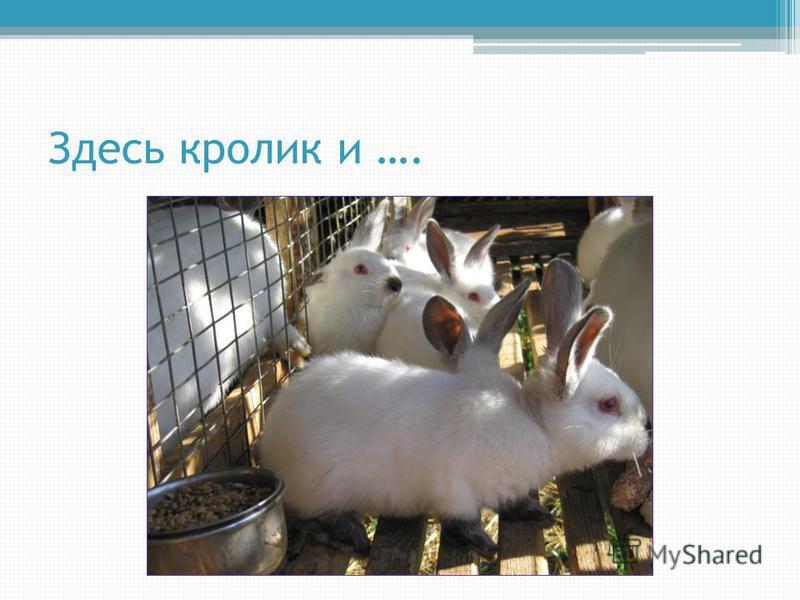 Здесь кролик и ….
