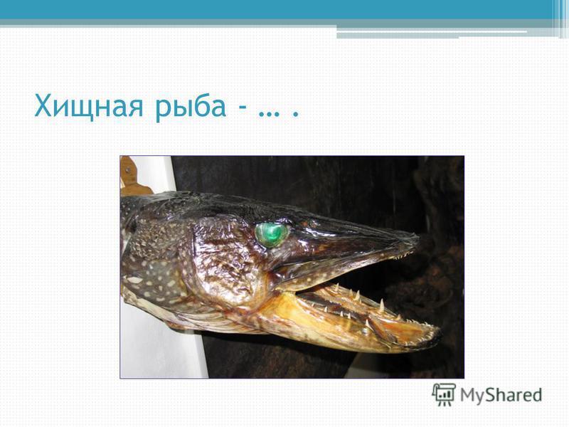 Хищная рыба - ….