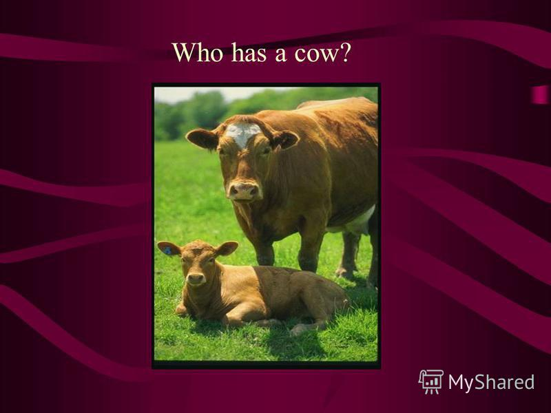 Who has a cow?
