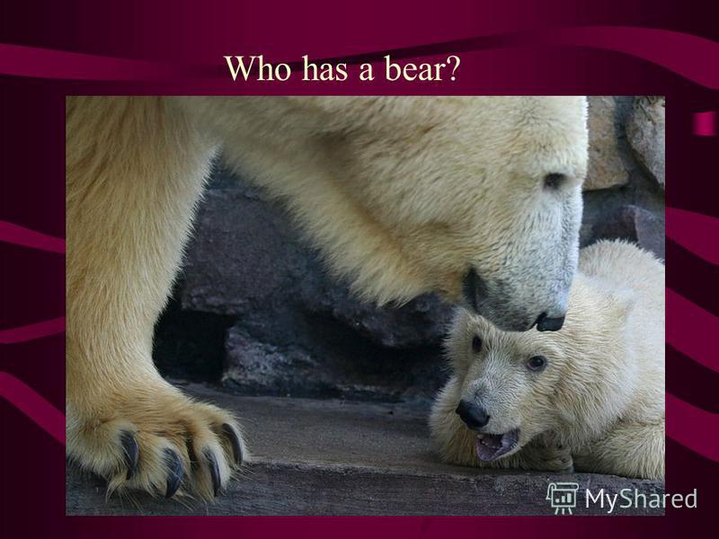 Who has a bear?