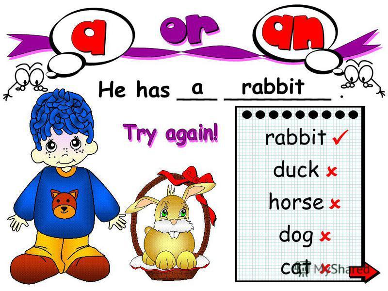 He has ___ ________. arabbit cat rabbit duck horse dog