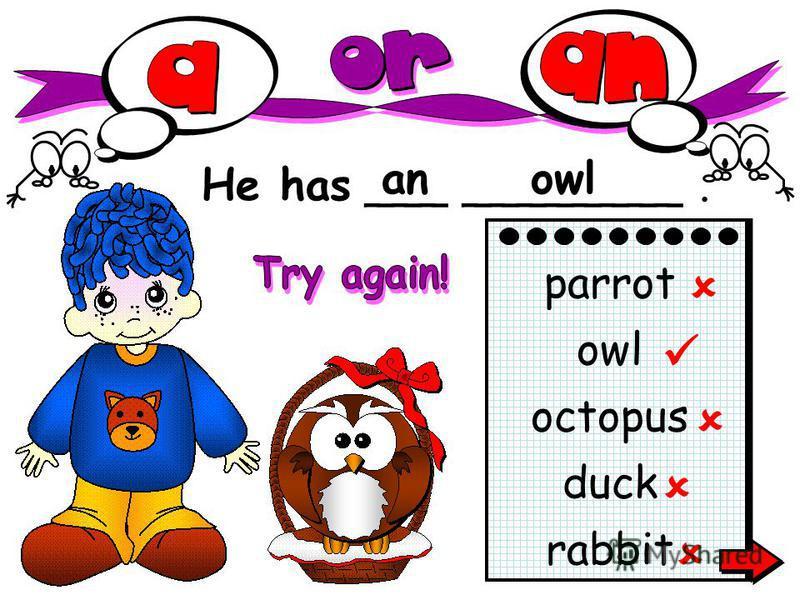 He has ___ ________. anowl rabbit parrot owl octopus duck