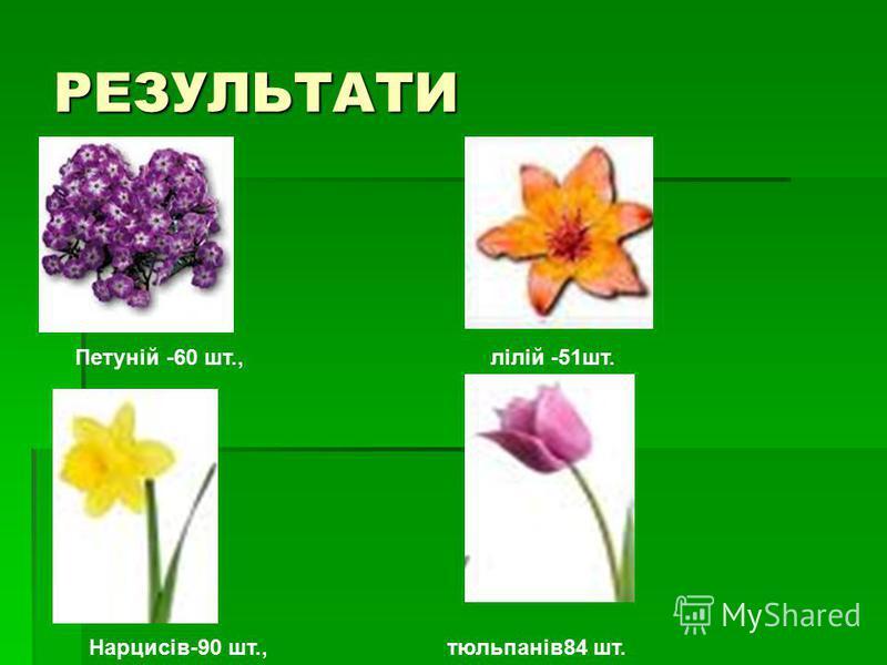 РЕЗУЛЬТАТИ Петуній -60 шт., лілій -51шт. Нарцисів-90 шт., тюльпанів84 шт.