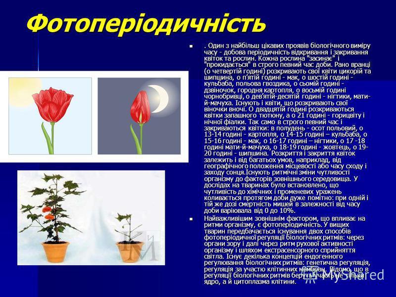Фотоперіодичність. Один з найбільш цікавих проявів біологічного виміру часу - добова періодичність відкривання і закривання квіток та рослин. Кожна рослина