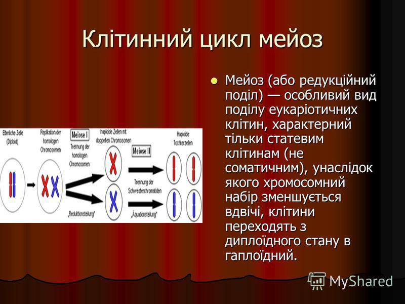 Клітинний цикл мейоз Мейоз (або редукційний поділ) особливий вид поділу еукаріотичних клітин, характерний тільки статевим клітинам (не соматичним), унаслідок якого хромосомний набір зменшується вдвічі, клітини переходять з диплоїдного стану в гаплоїд