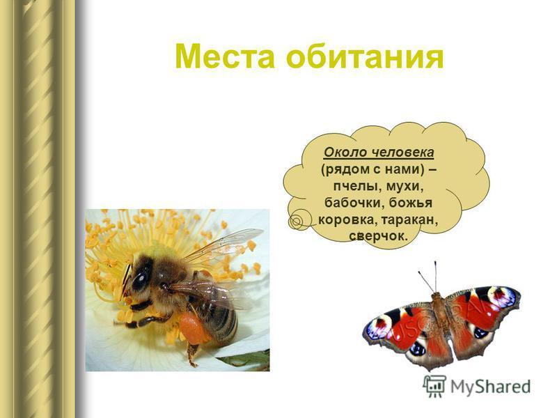 Места обитания Около человека (рядом с нами) – пчелы, мухи, бабочки, божья коровка, таракан, сверчок.