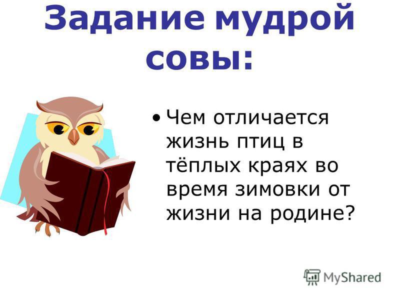 Задание мудрой совы: Чем отличается жизнь птиц в тёплых краях во время зимовки от жизни на родине?