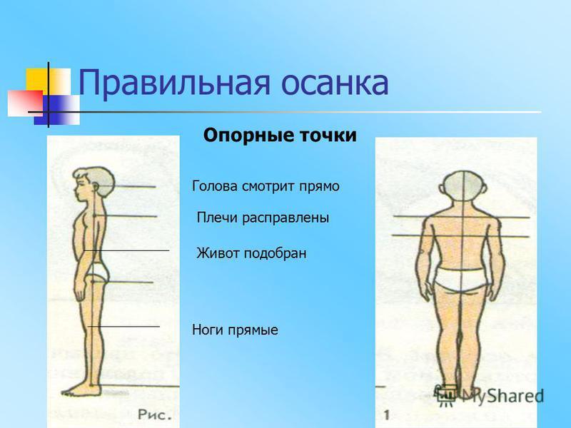 Правильная осанка Опорные точки Голова смотрит прямо Плечи расправлены Живот подобран Ноги прямые